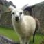 Alpaca_sekaiissue