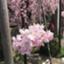 Aoi_HSP