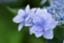 id:Apple614