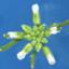 id:Arabidopsis