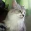 id:Ash-Cat