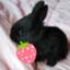 id:BunnyBunny