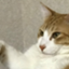 id:CatDrop