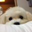 id:Chatterton