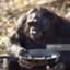 Chimpanzeethe38Parallel