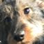 Dogobserver