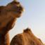 id:Dubailingual