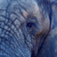 ElephantDaddy