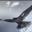 id:Falconsasuke
