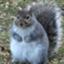 FatSquirre