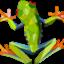 Frog_kt