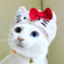 id:Gomez-cat