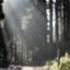 id:HU_forestry