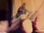 id:Hi_nekosan