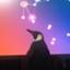 HirO__Koizumi