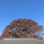 id:IBARAKI432
