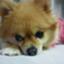J_LilyLove