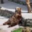 id:Kibori719
