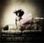Lycoris_i
