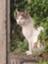 id:MI_SAN_CAT