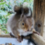 id:MR-Squirrel