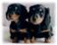 id:Masae_t