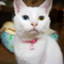 Masaki_writing