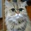 Masayan_W