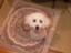 id:Mini_Mini_Dai_Sakusen