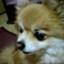 id:Mitsuhiko