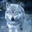 Moon--Wolf