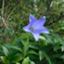 id:NatureAroundTakarazuka