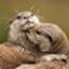 id:Otterlife