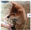 id:POCHI_BLACK