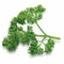 id:Parsley