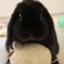 Ponz-rabbit