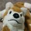 PuppyHachi