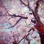 id:ReJapan