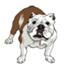 id:Rubydog