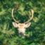 Rudolph914