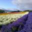 id:SatoRu0212