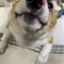 id:SiSH_4u