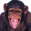 SmartChimpanzee