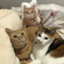 id:Three_Traveling_Cats