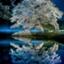 id:Tomo41020216