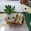 id:Watawata