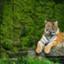id:Wildlifesafari