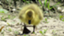 id:Yellowbird
