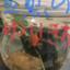 id:Yuikichi