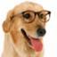 id:Yuu-glassdog